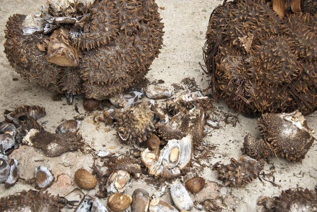 tagua-nuss-stein-nuss-rohzustand-unikatschmuck-schmucktraum