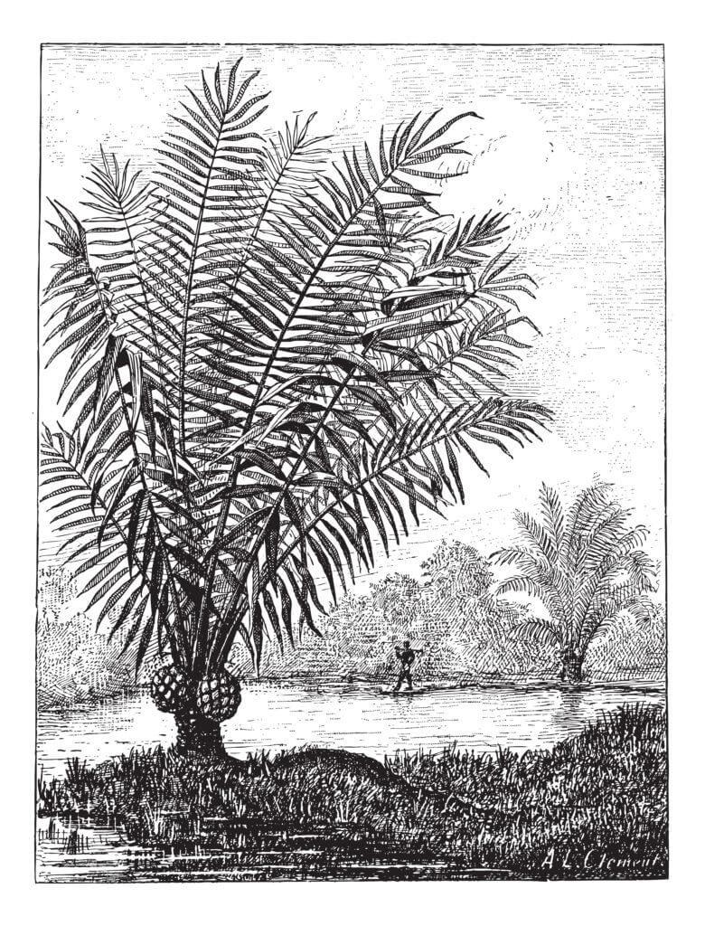 tagua-nuss-stein-nuss-zeichnung-schmuckwerkstatt-christine-lindner